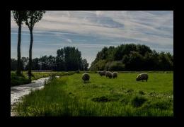 Foto's van Scharrelboerderij Wadwaai in Wognum